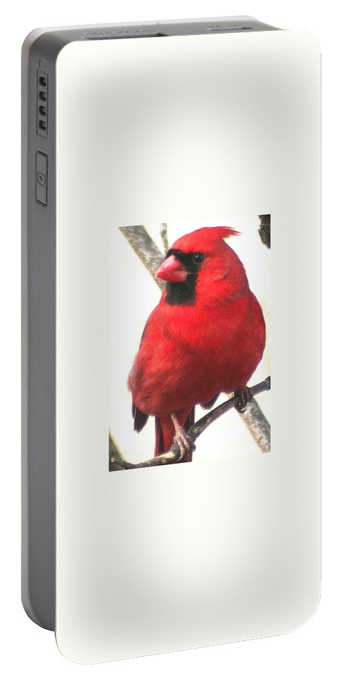 Northern Cardinal Portable Battery Charger featuring the photograph Northern Cardinal Closeup by Laurel Talabere