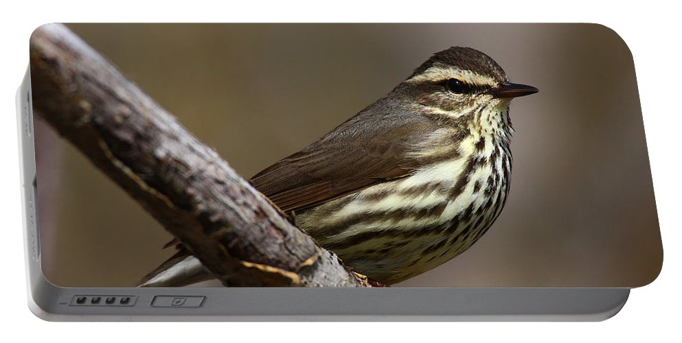 Doug Lloyd Portable Battery Charger featuring the photograph Northern Waterthrush by Doug Lloyd
