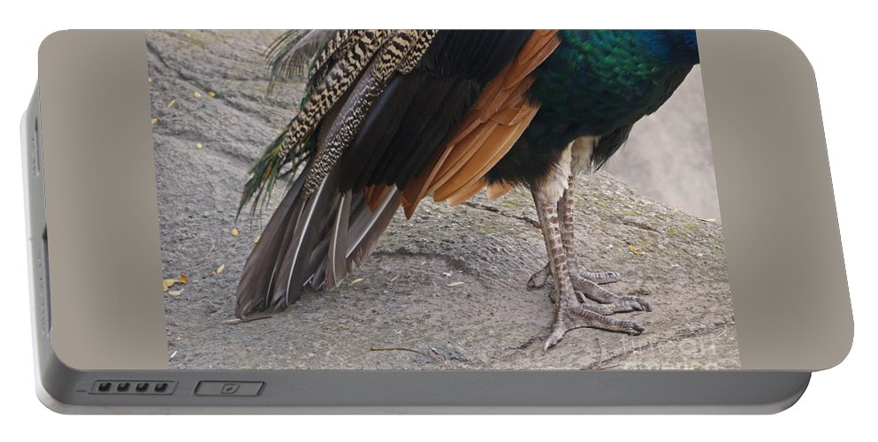 Peahen Portable Battery Charger featuring the photograph Her Kind Of Beauty by Ann Horn