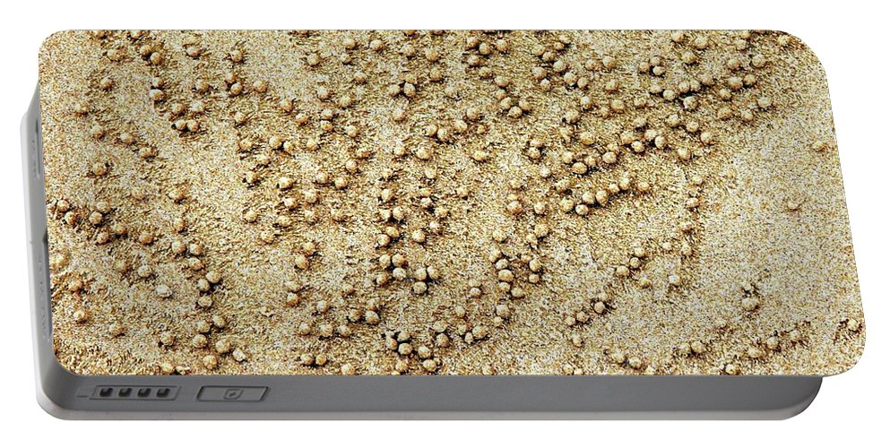 Crabs Portable Battery Charger featuring the photograph Now Where Did L Bury That..... by Karen Elzinga