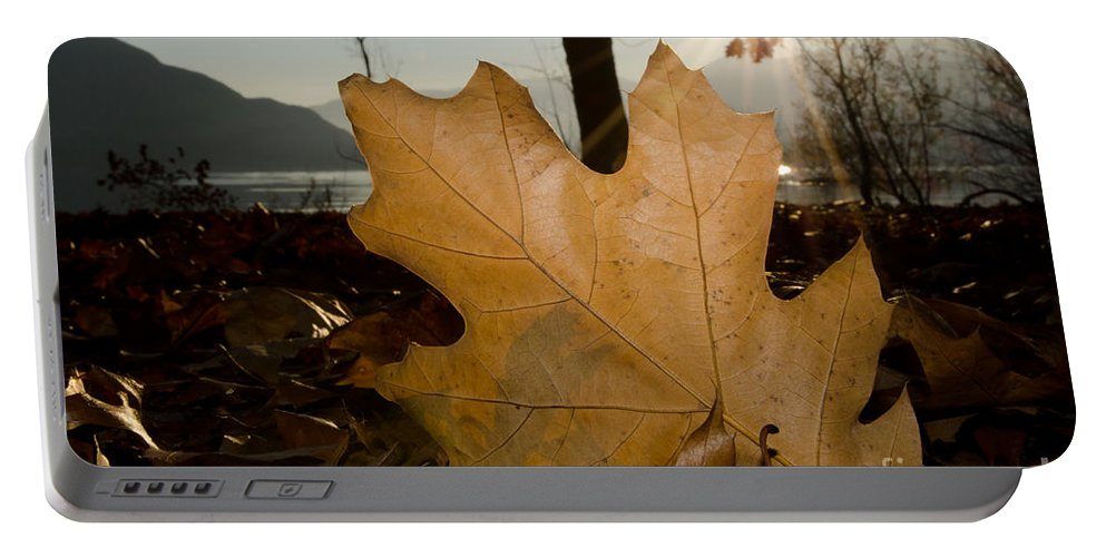 Leaf Portable Battery Charger featuring the photograph Oak Leaf In Backlight by Mats Silvan