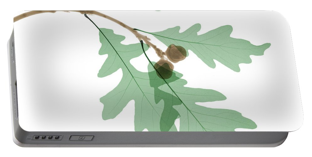 X-ray Portable Battery Charger featuring the photograph Oak Leaves, X-ray by Ted Kinsman