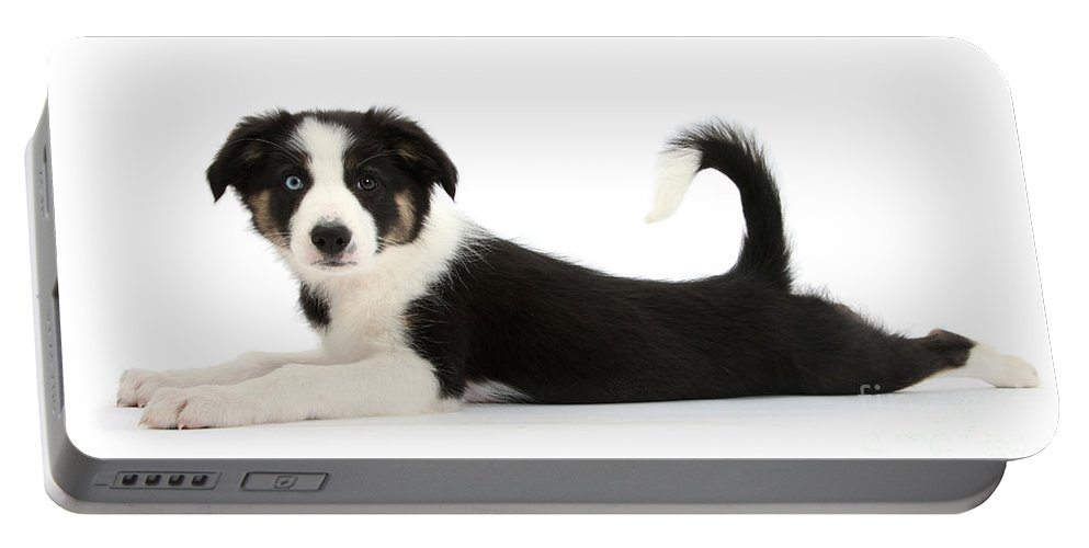 Animal Portable Battery Charger featuring the photograph Odd-eyed Border Collie Pup by Mark Taylor