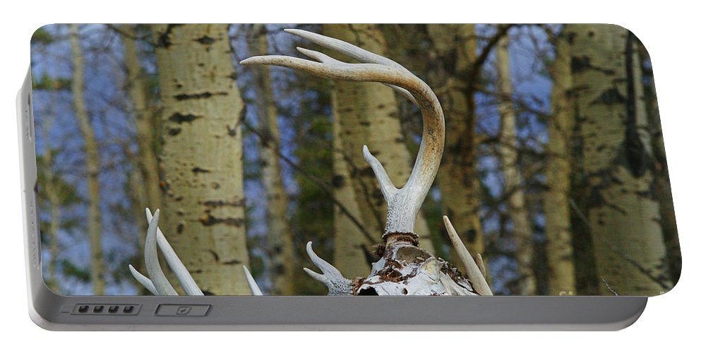 Skull Portable Battery Charger featuring the photograph Old Skull And Antlers by Randy Harris