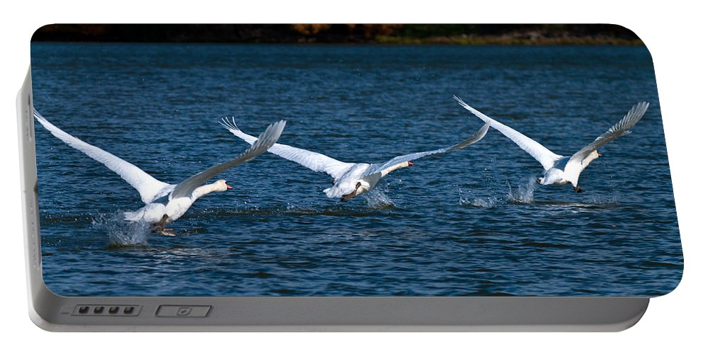 Mute Swans During Takeoff Portable Battery Charger featuring the photograph One Two Three Go by Randall Branham