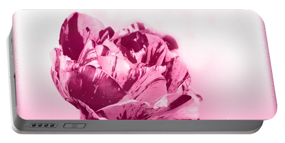 Rose Portable Battery Charger featuring the photograph Only A Rose by Jim And Emily Bush