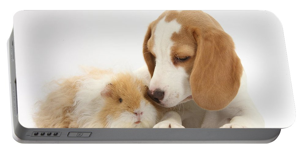 Nature Portable Battery Charger featuring the photograph Orange-and-white Beagle Pup And Alpaca by Mark Taylor