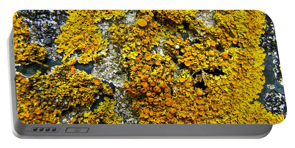 Lichen Portable Battery Charger featuring the photograph Orange Lichen - Xanthoria Parietina by Mother Nature