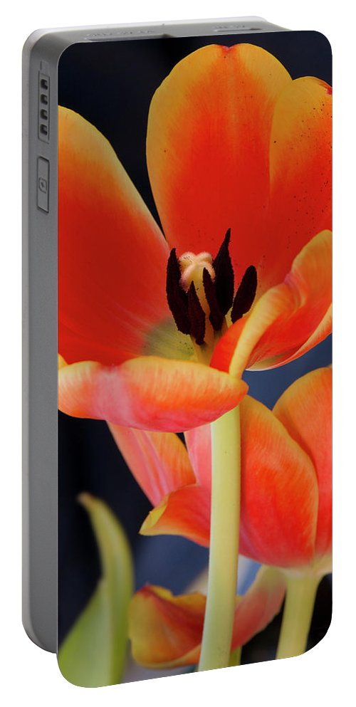 Blossom Portable Battery Charger featuring the photograph Orange Tulips by Gary Eason