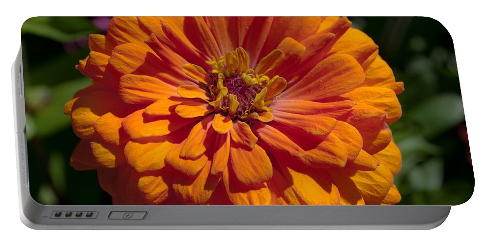 Zinnia Portable Battery Charger featuring the photograph Orange Zinnia by Tikvah's Hope