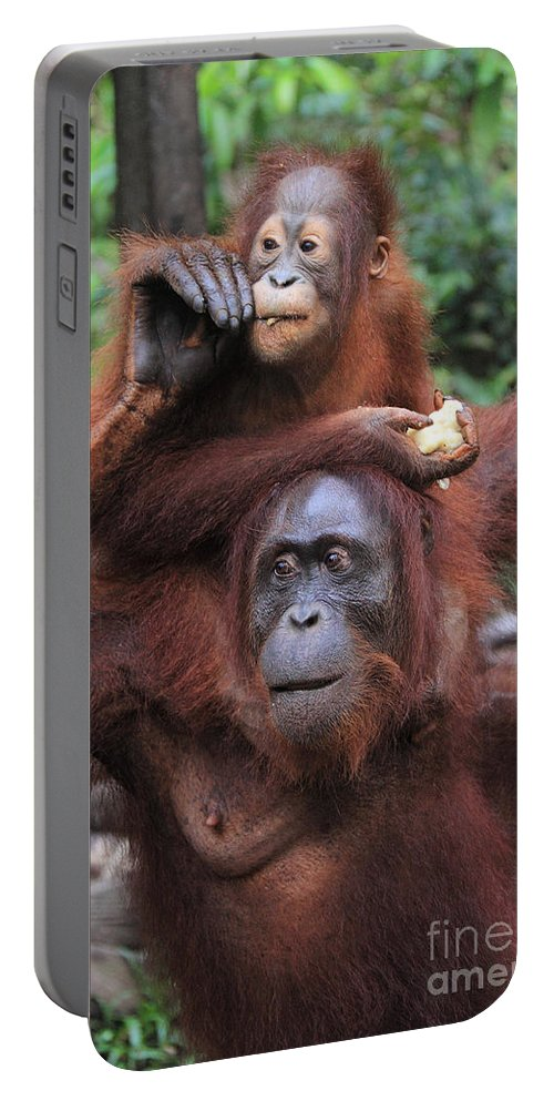 Nature Portable Battery Charger featuring the photograph Orangutans by Mark Taylor