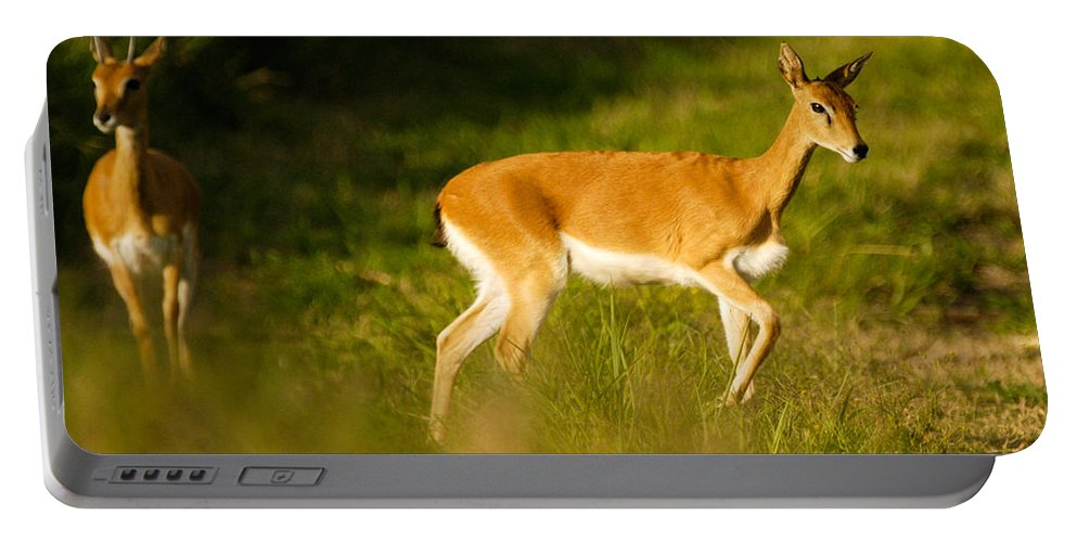 Action Portable Battery Charger featuring the photograph Oribi Two by Alistair Lyne
