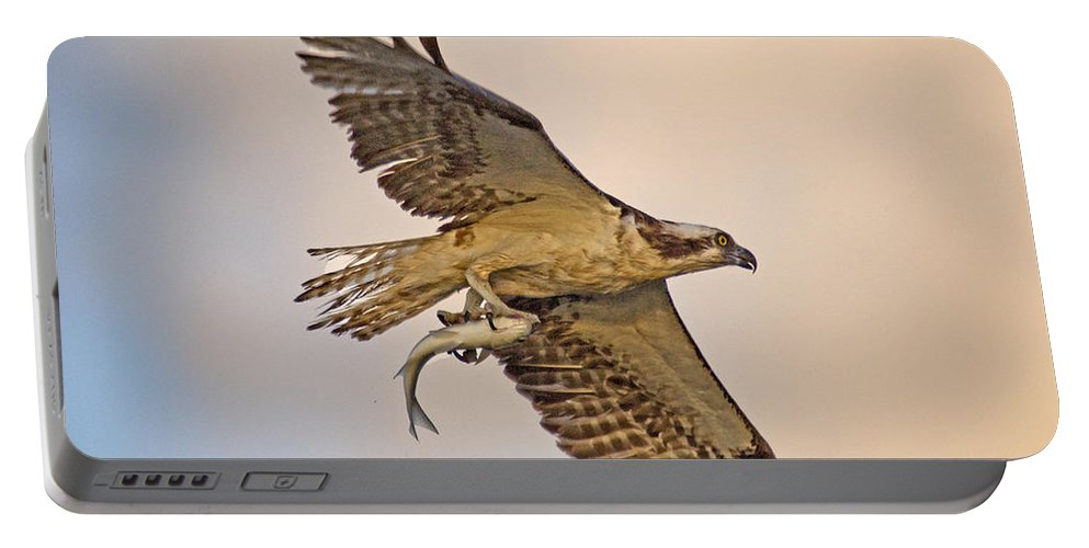 Osprey Portable Battery Charger featuring the photograph Osprey Catches Big Fish by TJ Baccari