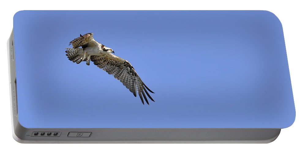 Osprey Portable Battery Charger featuring the photograph Osprey in Flight by Christine Stonebridge