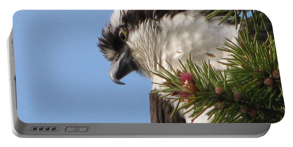 Bird Portable Battery Charger featuring the photograph Osprey by Leone Lund