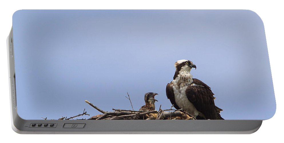 Osprey Portable Battery Charger featuring the photograph Osprey Mother And Chick by Stephanie McDowell