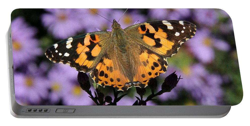 Painted Lady Portable Battery Charger featuring the photograph Painted Lady Among The Asters by Doris Potter