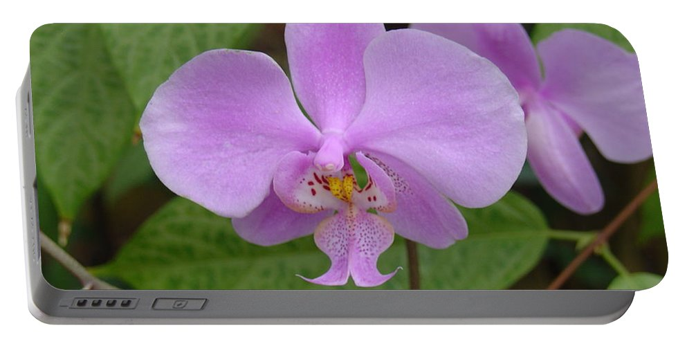 Orchid Portable Battery Charger featuring the photograph Pale Pink Orchid by Charles and Melisa Morrison