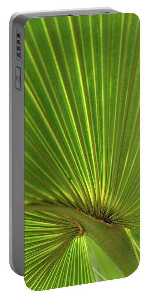 Palm Portable Battery Charger featuring the photograph Palm Leaf by JD Grimes
