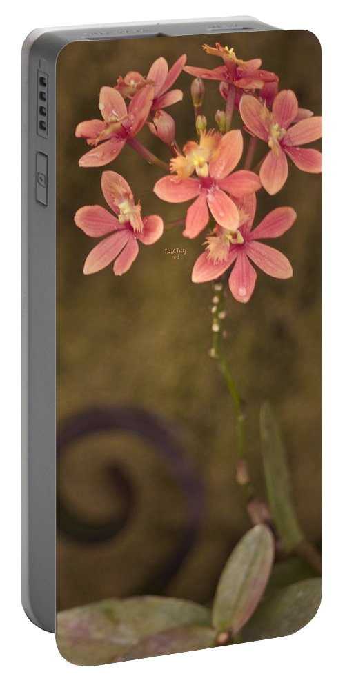 Flower Portable Battery Charger featuring the photograph Passionate Pink by Trish Tritz