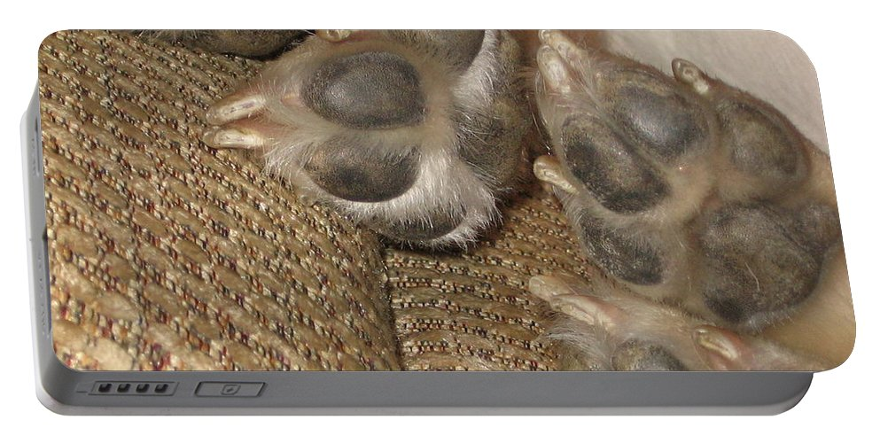 Portable Battery Charger featuring the photograph Paws by Amy Hosp
