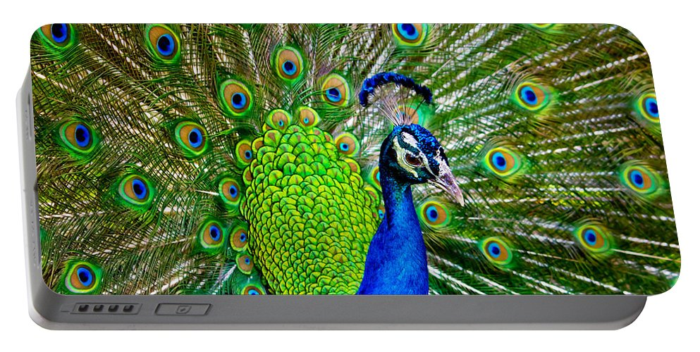 Peacock Portable Battery Charger featuring the photograph Peacock Display by Mark Andrew Thomas