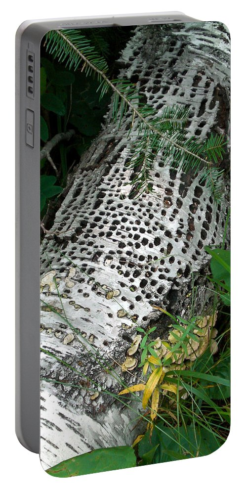 Birch Portable Battery Charger featuring the photograph Pecked Birch by Brenda Hagenson