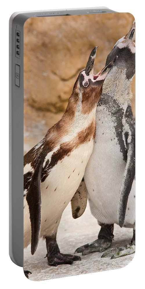 Animal Portable Battery Charger featuring the photograph Penguin by Tom Gowanlock
