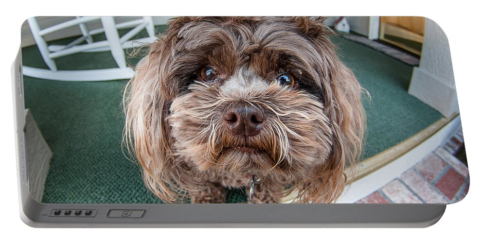 Dog Portable Battery Charger featuring the photograph Perplexed Pouch by Greg Nyquist