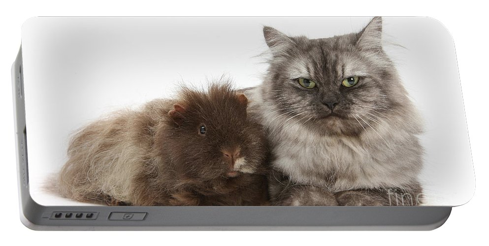 Nature Portable Battery Charger featuring the photograph Persian X Birman Female Cat With Guinea by Mark Taylor
