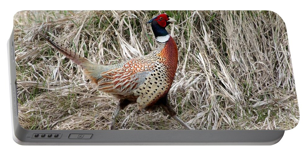 Rooster Portable Battery Charger featuring the photograph Pheasant Walking by Lori Tordsen