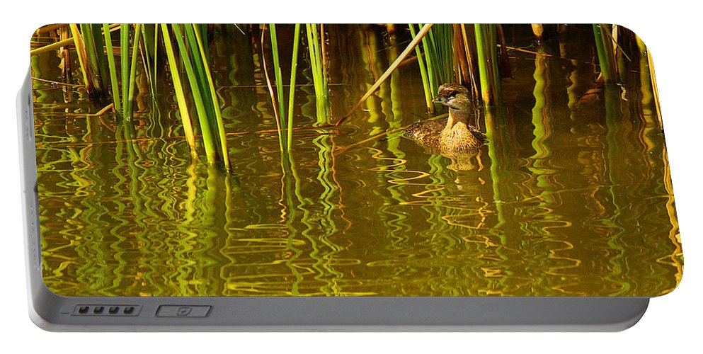Roena King Portable Battery Charger featuring the photograph Pied-billed Grebe Near The Reeds by Roena King