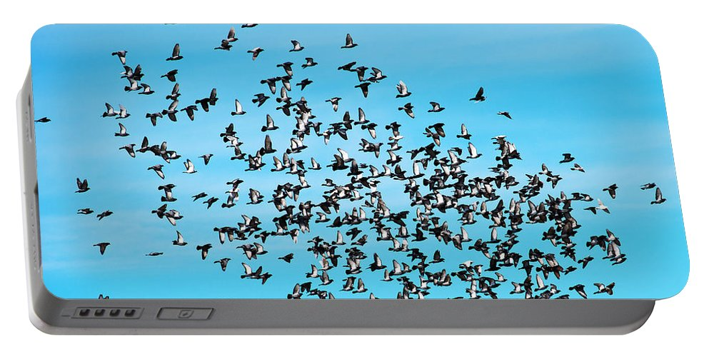 Pigeon Portable Battery Charger featuring the photograph Pigeon Flight by Edward Peterson