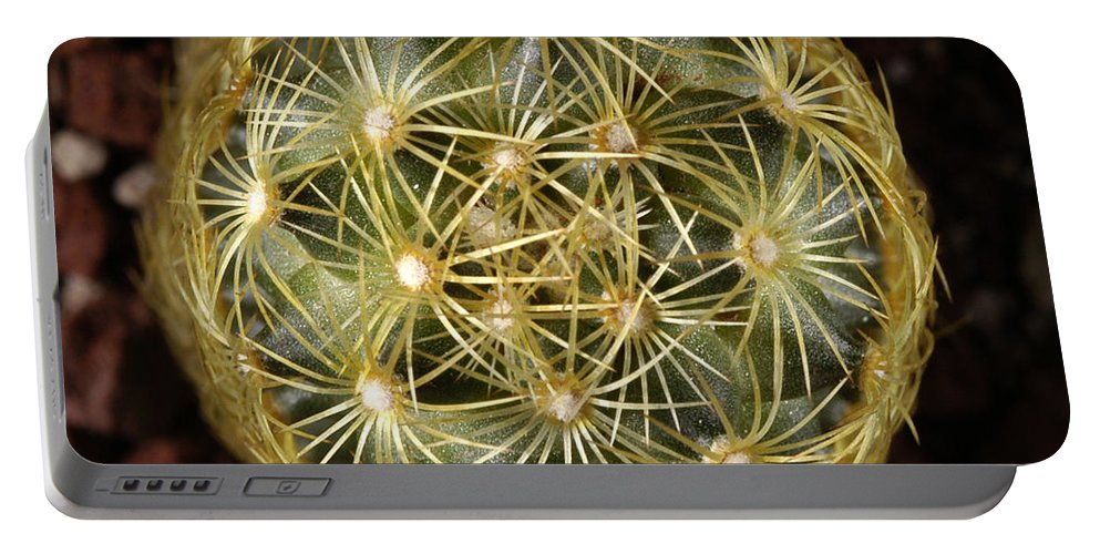 Cacteae Portable Battery Charger featuring the photograph Pincushion Cactus by Raul Gonzalez Perez