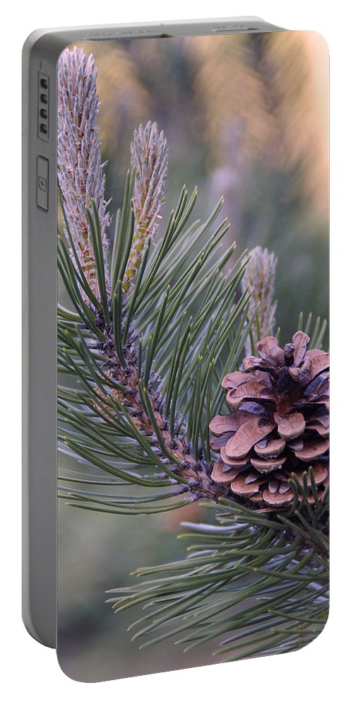 Pine Cone Portable Battery Charger featuring the photograph Pine Cone At Sundown by Mick Anderson