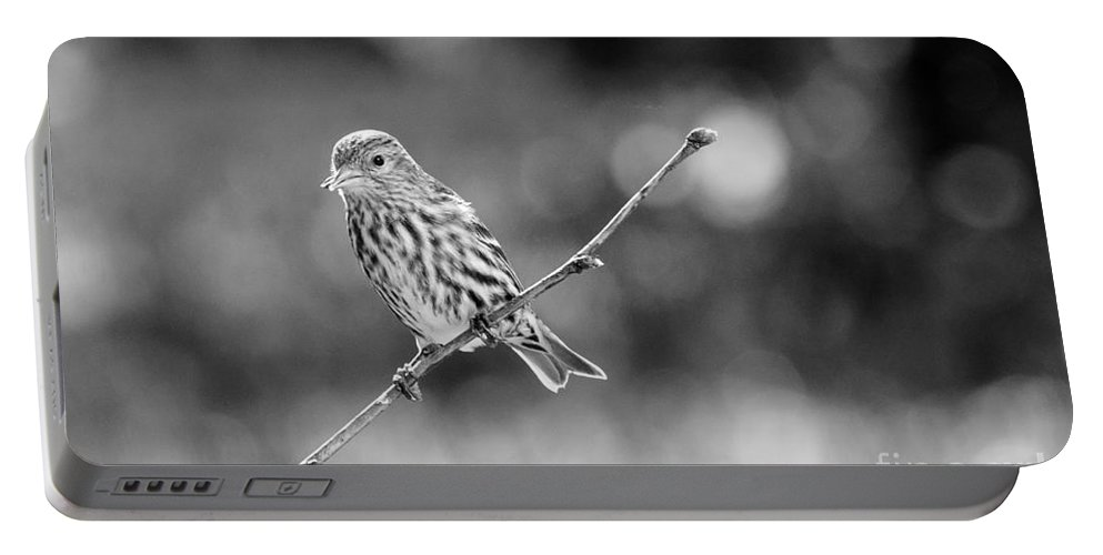 Bird Portable Battery Charger featuring the photograph Pine Siskin by Cheryl Baxter