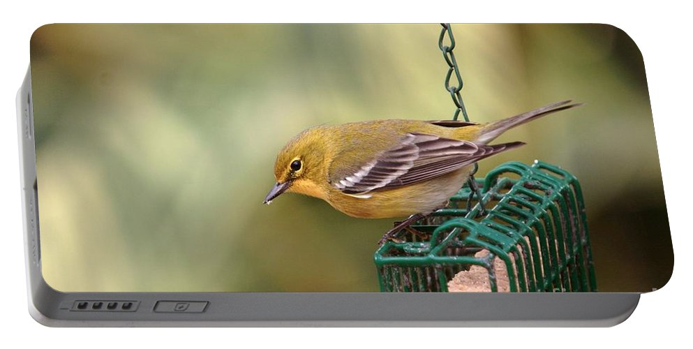 Bird Portable Battery Charger featuring the photograph Pine Warbler 3 by Randy Matthews
