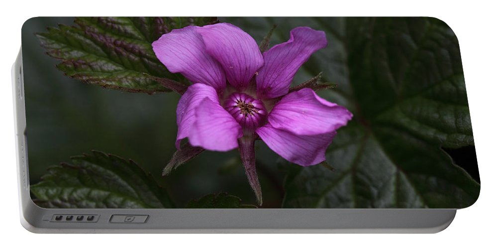 Doug Lloyd Portable Battery Charger featuring the photograph Pink Beauty by Doug Lloyd