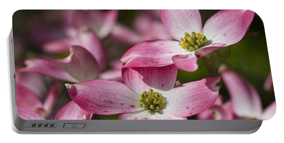 Cornus Florida Portable Battery Charger featuring the photograph Pink Flowering Dogwood - Cornus Florida Rubra by Kathy Clark