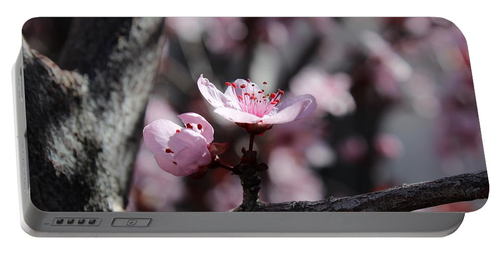 Floral Portable Battery Charger featuring the photograph Plum Blossoms 9 by Kume Bryant