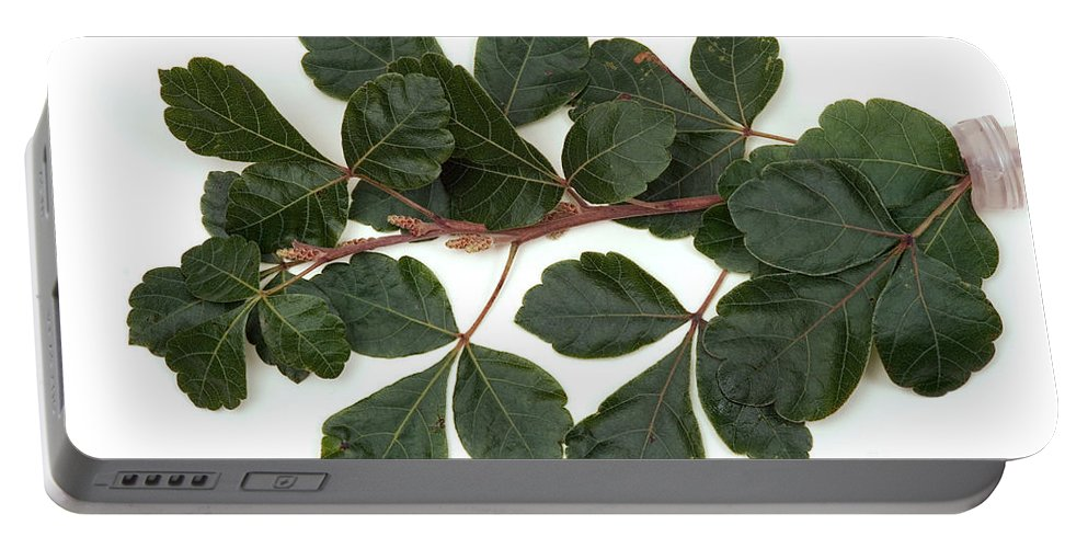Plant Portable Battery Charger featuring the photograph Poison Oak Branch by Ted Kinsman