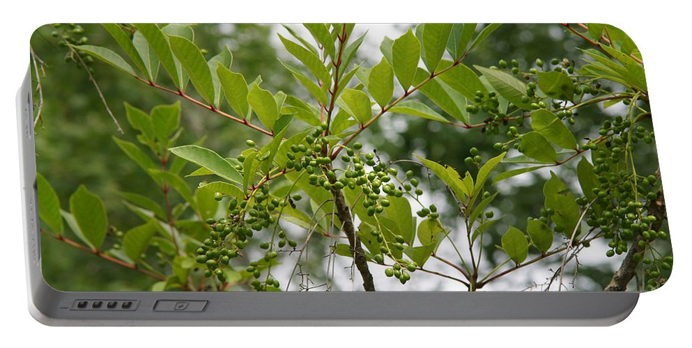 Plant Portable Battery Charger featuring the photograph Poison Sumac by Ted Kinsman