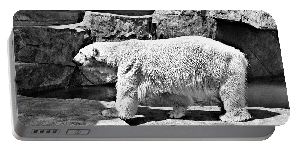 Polar Bear Portable Battery Charger featuring the photograph Polar Bear by Tommy Anderson