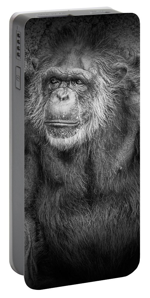 Art Portable Battery Charger featuring the photograph Portrait Of A Chimpanzee by Randall Nyhof