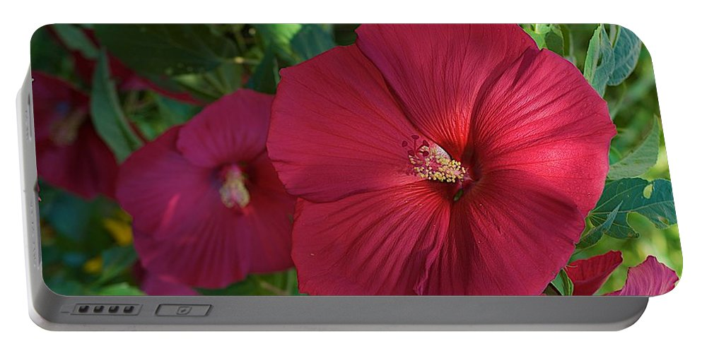 Hibiscus Portable Battery Charger featuring the photograph Potchen's Hibiscus by Joseph Yarbrough