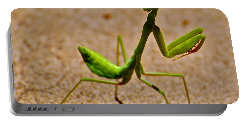 Praying Mantis Portable Battery Charger featuring the photograph Preying Praying by Eric Tressler