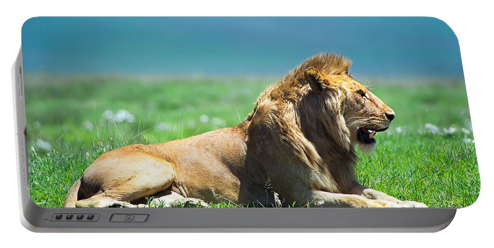Africa Portable Battery Charger featuring the photograph Pride by Sebastian Musial
