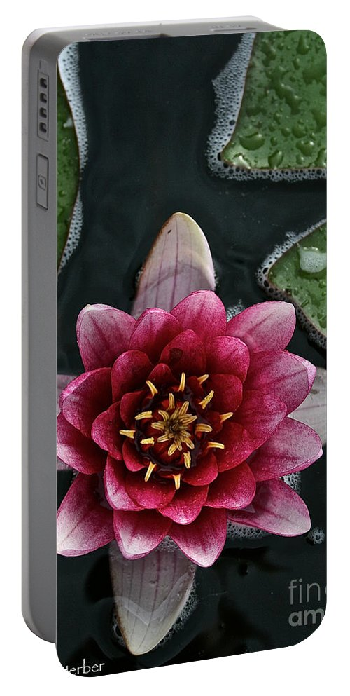 Floral Portable Battery Charger featuring the photograph Primo Waterlily by Susan Herber