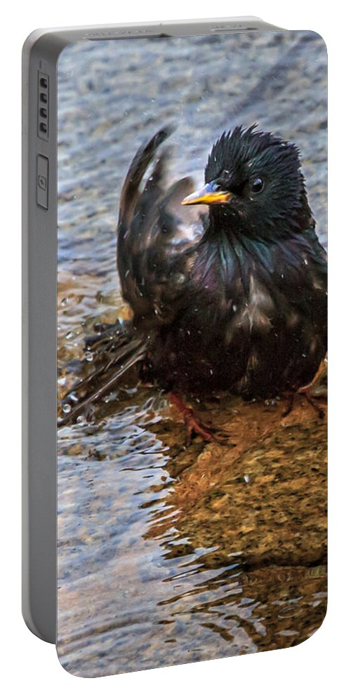 Starling Portable Battery Charger featuring the photograph Public Bathing by Bob Orsillo