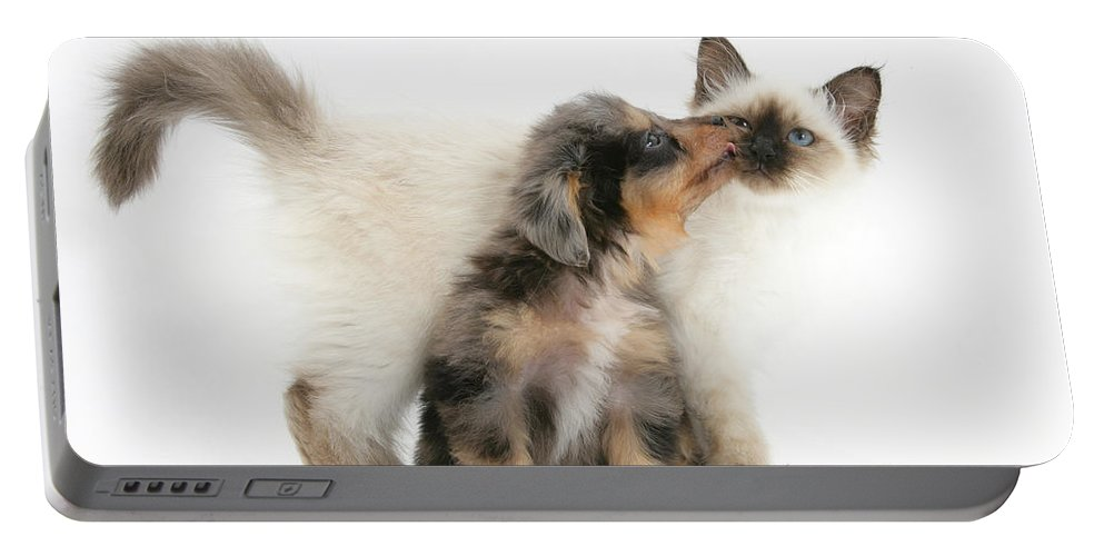Animal Portable Battery Charger featuring the photograph Puppy Licking Kitten by Mark Taylor